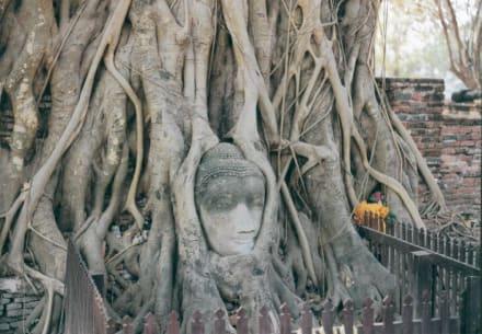 Thailand Bangkok Ayutthaya Steingesicht im Baum - Wat Mahathat