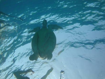 Sonst. Unterwassermotiv - Schnorcheln Abu Dabab