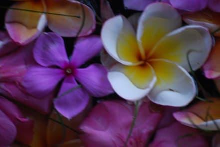 Sonstige Sehenswürdigkeit - Schnorcheln Koh Phi Phi