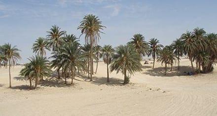 Oase - dune-desert-discover