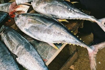 Thunfische am Stand - Fischmarkt Negombo