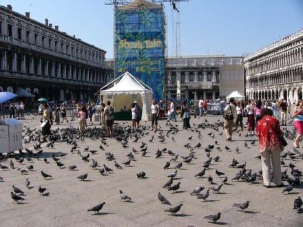 Tauben auf dem Markusplatz - Markusplatz