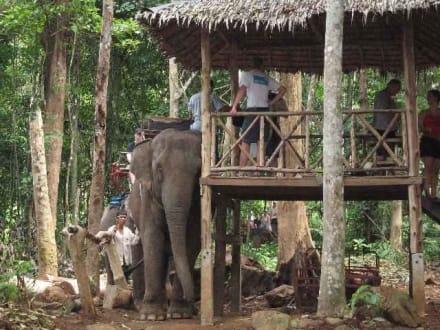 Elefantenleiter - Elefantentrecking