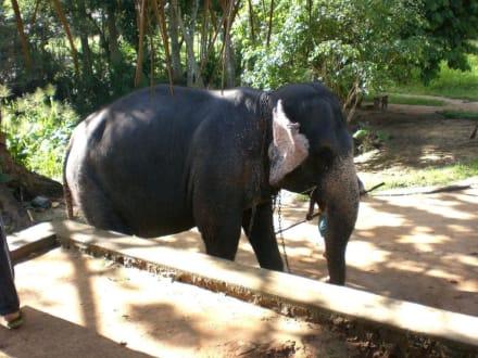 Elefantenreiten - Elefantenwaisenhaus Pinnawela