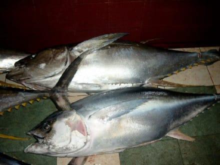 Fisch - Fischmarkt