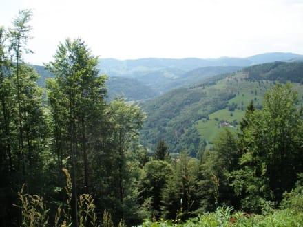 Aussicht vom Hasenhorn - Rodelbahn Todtnau