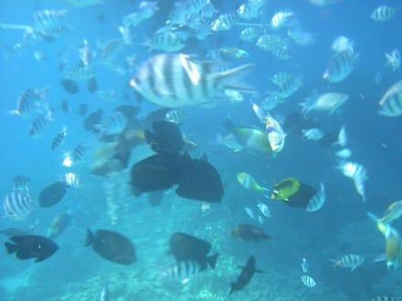 Unterwasserfoto - Giftun / Mahmya Inseln