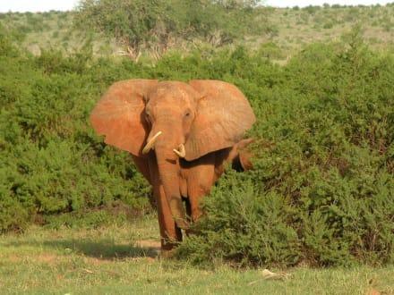 Oh, Ooooh! Angriff? - Tsavo Ost Nationalpark