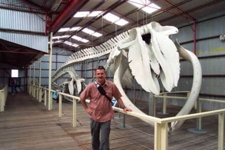 Skelett eines Blauwales - Whale World Albany