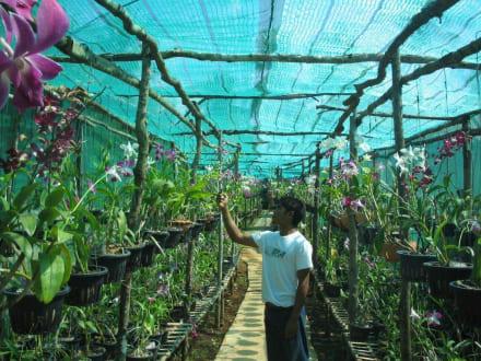 Orchideenfarm auf Koh Lanta - Orchideenfarm
