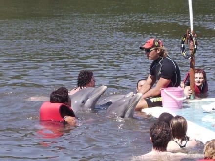 Schwimmen mit den Delfinen - Delfinarium Varadero