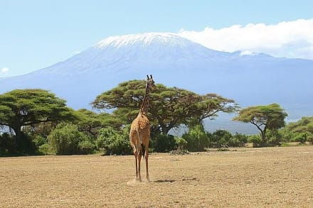 Schnee auf dem Kilimanjaro - Nationalpark Kilimandscharo / Kilimanjaro