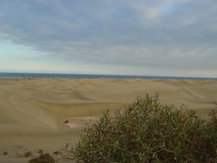 Die Dünen von Maspalomas - Dünen von Maspalomas