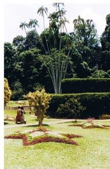Royal Botanic Garden in Peradeniya - Botanischer Garten Peradeniya