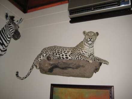 Leopard in der Lobby - Wabi Game Lodge
