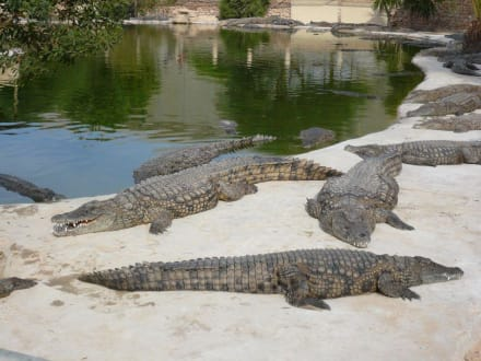 Krokodilfarm - Krokodilfarm Animalia
