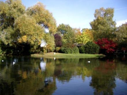 Englischer Garten - Englischer Garten