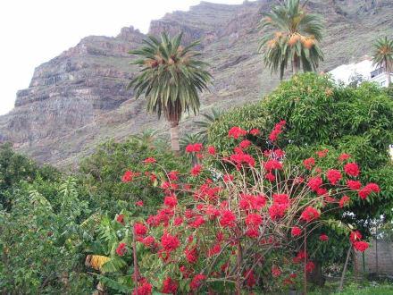 einfach idyllisch - Landschaft im Valle Gran Rey