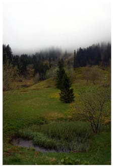 Wald- und Wiesenidylle am Feldberg - Feldberg
