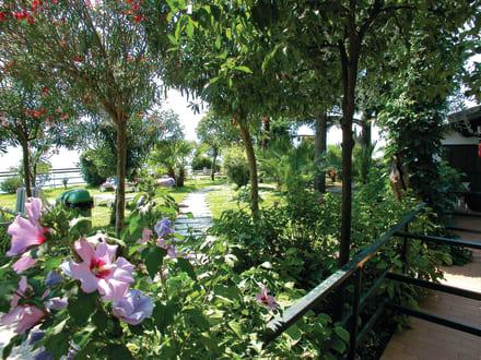 Garden / Garten -
