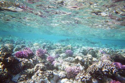 Korallen Riff - Inseln Hamata