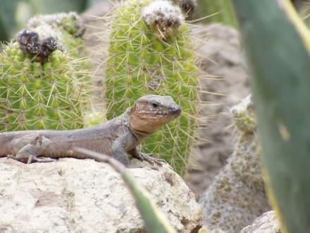 Gran Canaria - Spanien - Palmitos Park