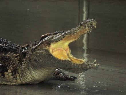 Spielen mit Kroko's ? - The Million Years Stone Park & Crocodile Farm