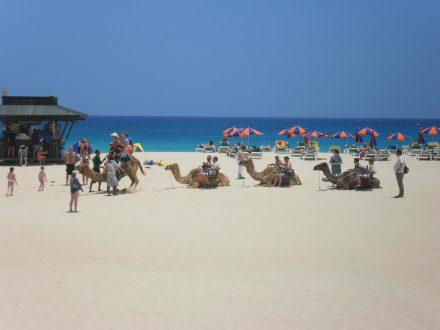 Kamelreiten direkt am strandabschnitt vorm hotel bild for Riu oliva beach village