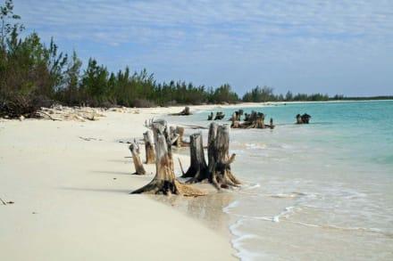 Cayo Largo - Leguaninsel Cayo Iguana