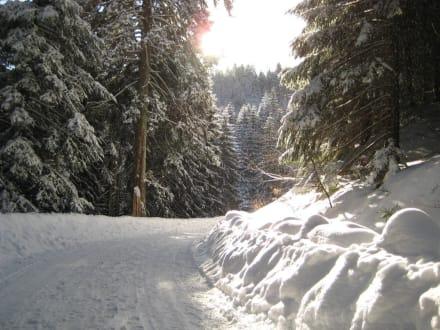 Wanderweg vom Seibelseckle zum Hotel - Wellnesshotel Forsthaus Auerhahn