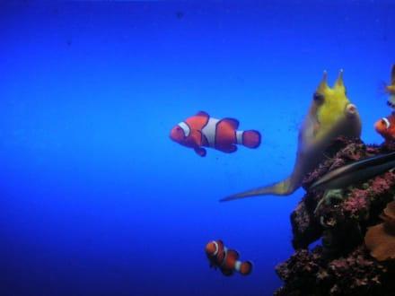 Nemo und seine Freunde - Loro Parque