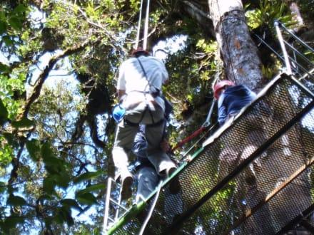 Canopy-Tour - Selvatura Park - Canopy Tour