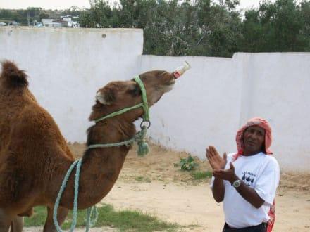 Karawane Ali Baba - Karawane Ali Baba (Ausflug)