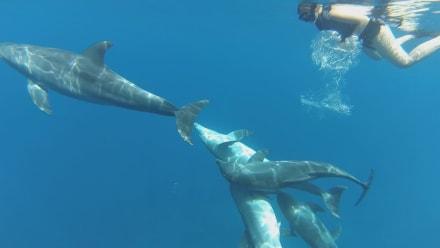 Delfinpups. - Mogli Delfine & Freunde Ltd.