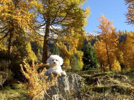 Herbstwald - Martelltal