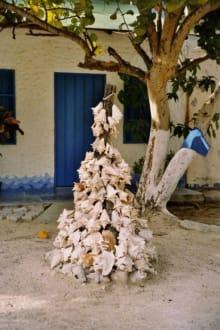 ein etwas anderer Weihnachtsbaum - Los Roques
