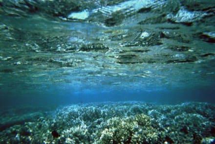 Zwischen Riff und Wasseroberfläche - Schnorcheln Hurghada