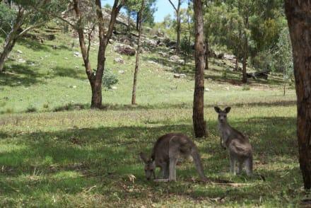 Landscape (other) - Warrumbungle National Park