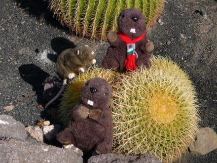 Endlich ein Kaktus - Oasis Park