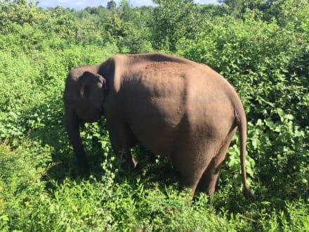 Elefant im Nationalpark - Martina & Prasanna's Holiday Tours