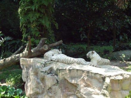 Im Zoo - Singapur Zoo
