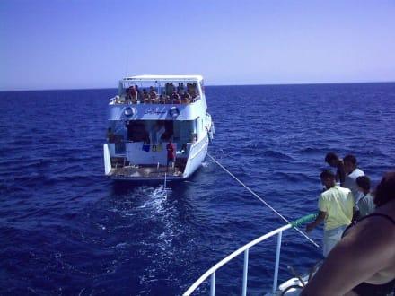 Barrakuda - Im Schlepp auf dem Roten Meer - Schnorcheln Hurghada