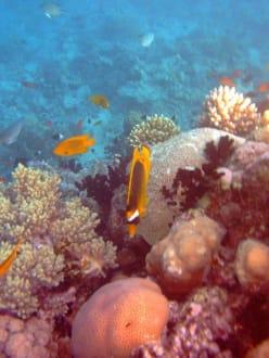 Schönes Riff - Ausflug mit Mohamed