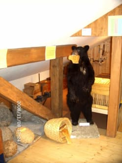 Bär im Jagdmuseum - Kleinmuseum Klösterle