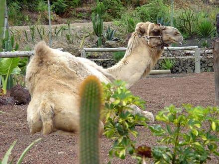 Safari Park - Loro Parque