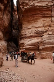 Arme Tiere - Felsenstadt Petra