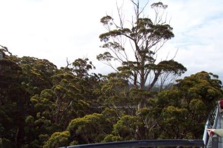 Blick über die Baumkronen - Tree Top Walk