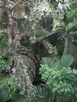 Tropische Pflanzenwelt - Kew Gardens