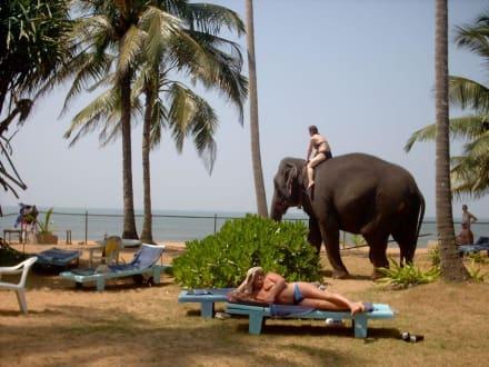 Animals (other)  -
