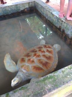 Nature reserve/Zoo - Koggala Turtle Farm